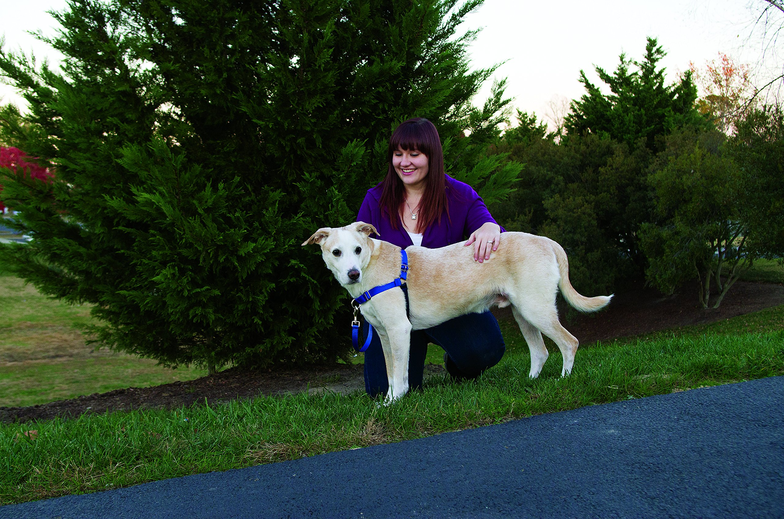 PetSafe Easy Walk Harness, Medium/Large, BLACK/SILVER for Dogs by PetSafe (Image #7)