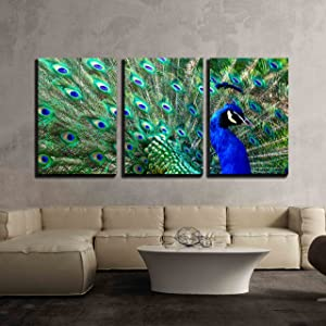 """wall26 - 3 Piece Canvas Wall Art - Male Peacock Displaying His Colorful Feathers - Modern Home Art Stretched and Framed Ready to Hang - 16""""x24""""x3 Panels"""