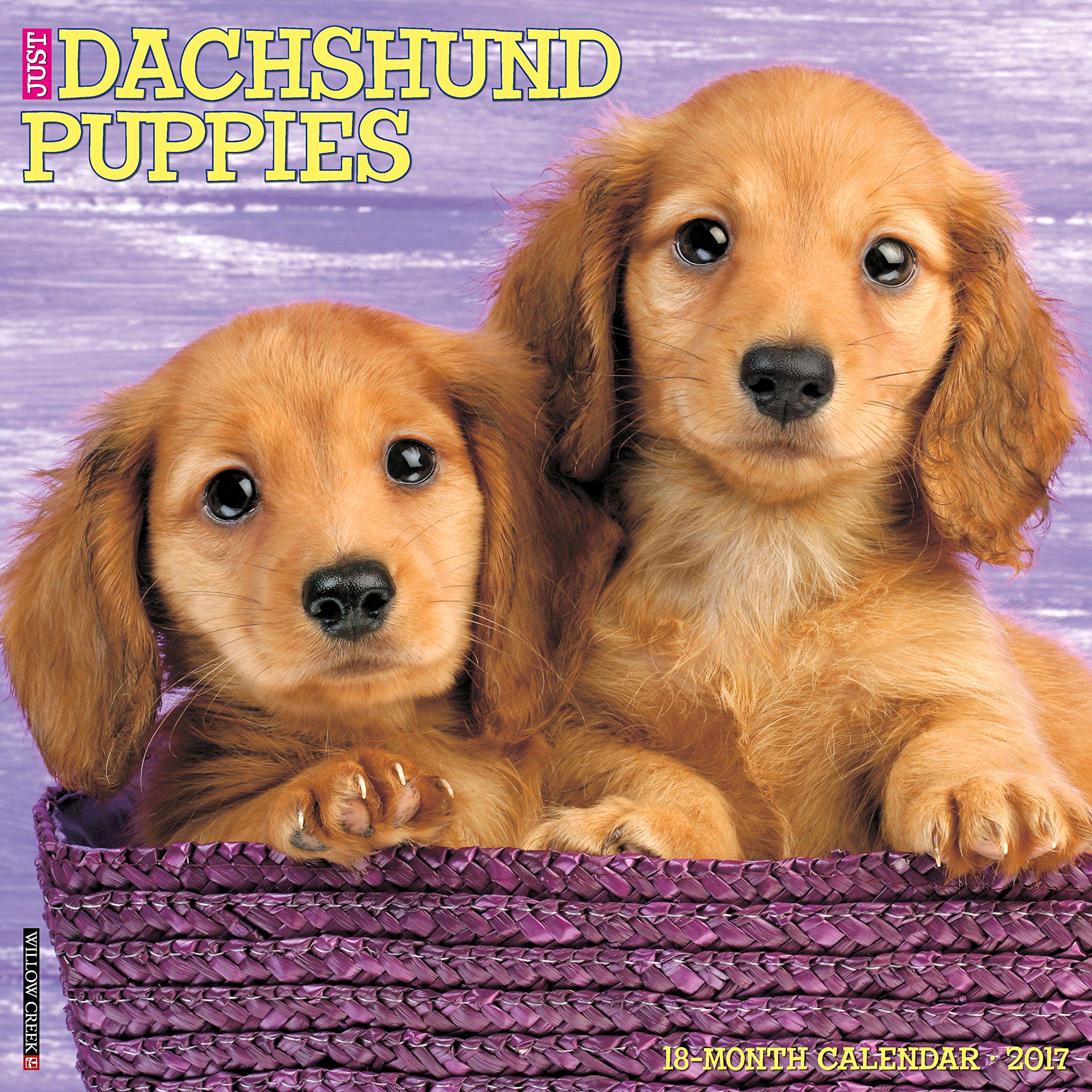 Just Dachshund Puppies 2017 Wall Calendar (Dog Breed Calendars) ebook