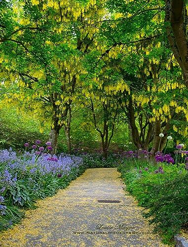 Laburnum Walk   Van Dusen Botanical Gardens Vancouver BC   Mouse Pad  (MPF351)