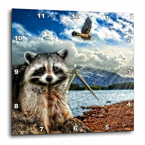 3dRose Raccoon and A Hawk in a Mountain Lake Setting. 5 Photographs Combined. – Wall Clock, 10 by 10-Inch DPP_173009_1