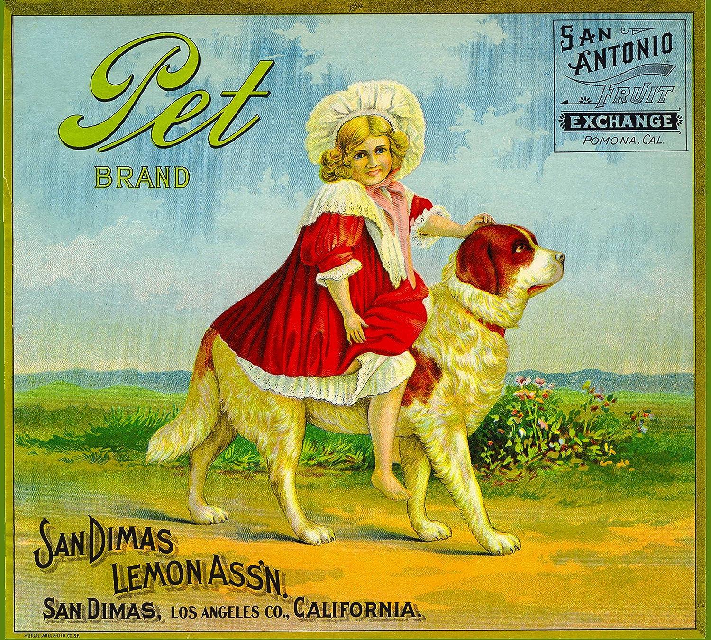 San Dimas Pet Saint Bernard Puppy Dog 3 Orange Citrus Crate Label Art Print