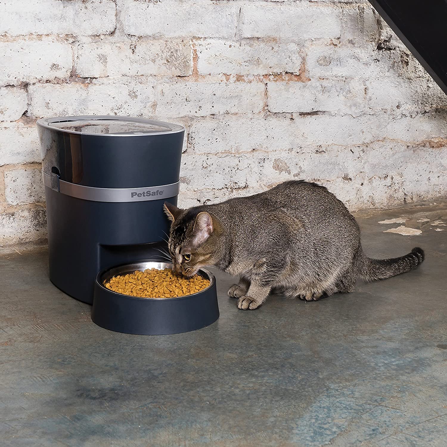 automatic cat feeder image