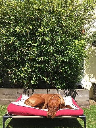 Snoozezy Cama elevada para mascotas Soporte ortopédico para perros y gatos que sufren de artritis y displasia de cadera, pero excelente para cualquier ...