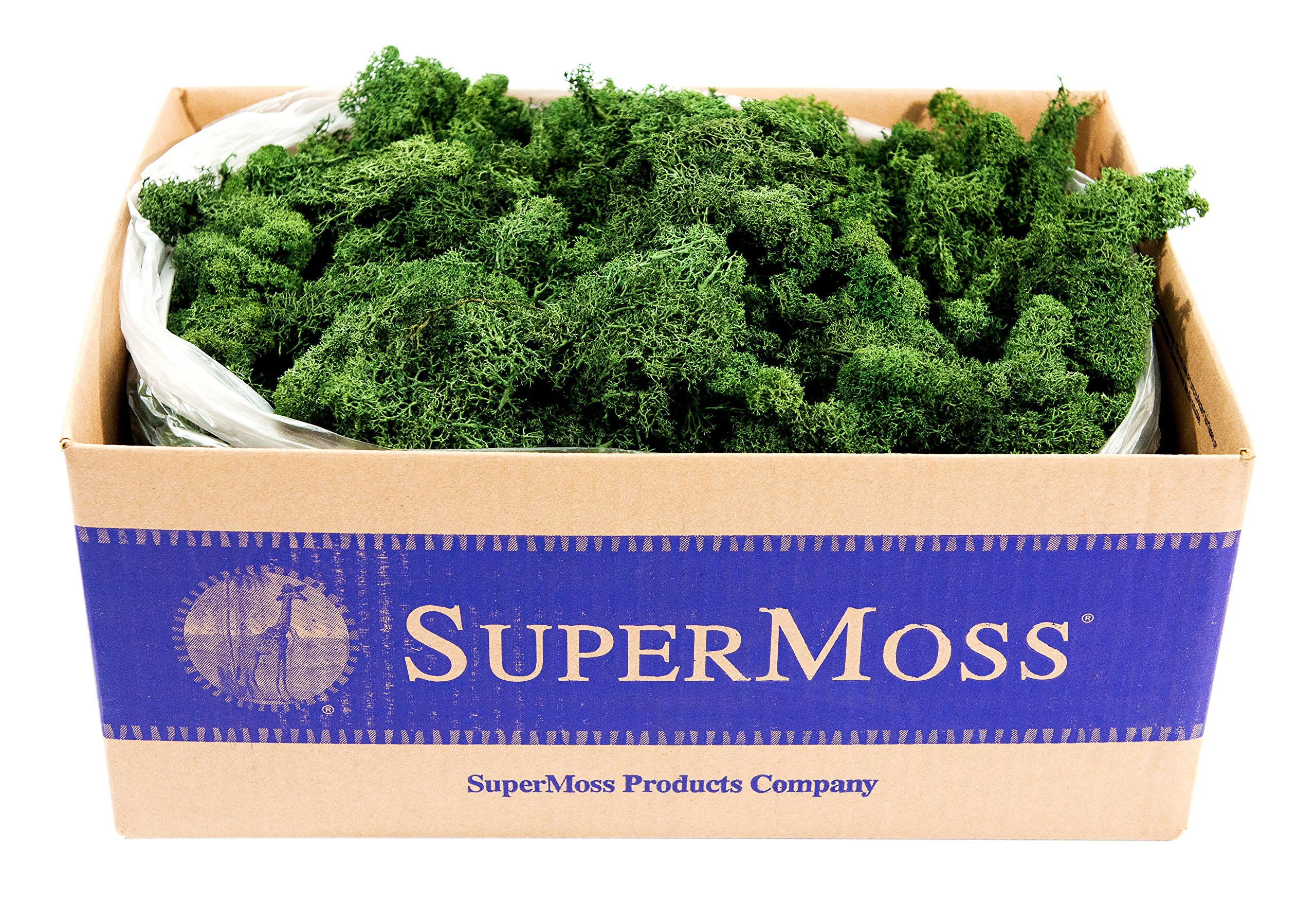 SuperMoss (21710) Reindeer Moss Preserved, Forest Green, 3lbs by Super Moss