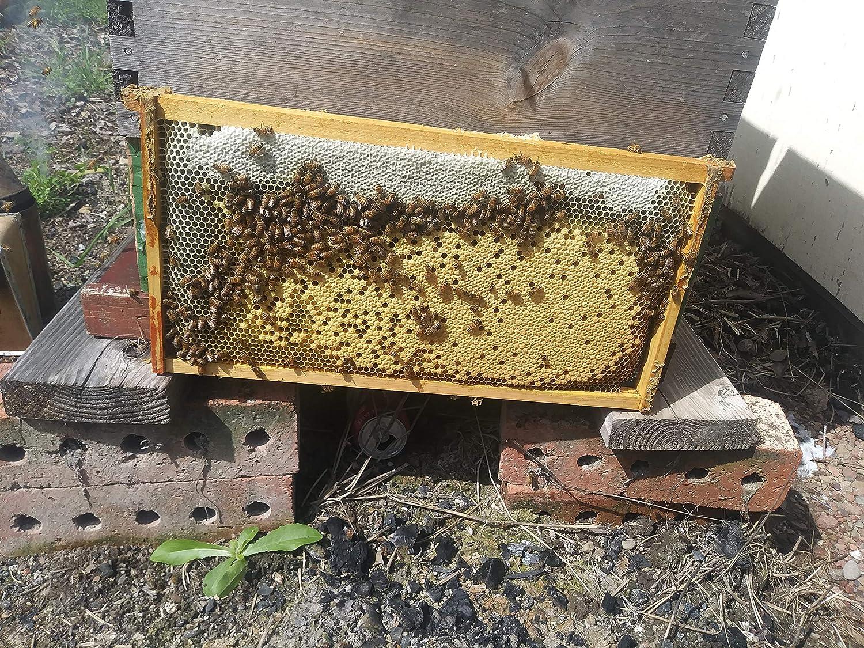 Acorn Bee black plastic sheets wax coated deep foundation