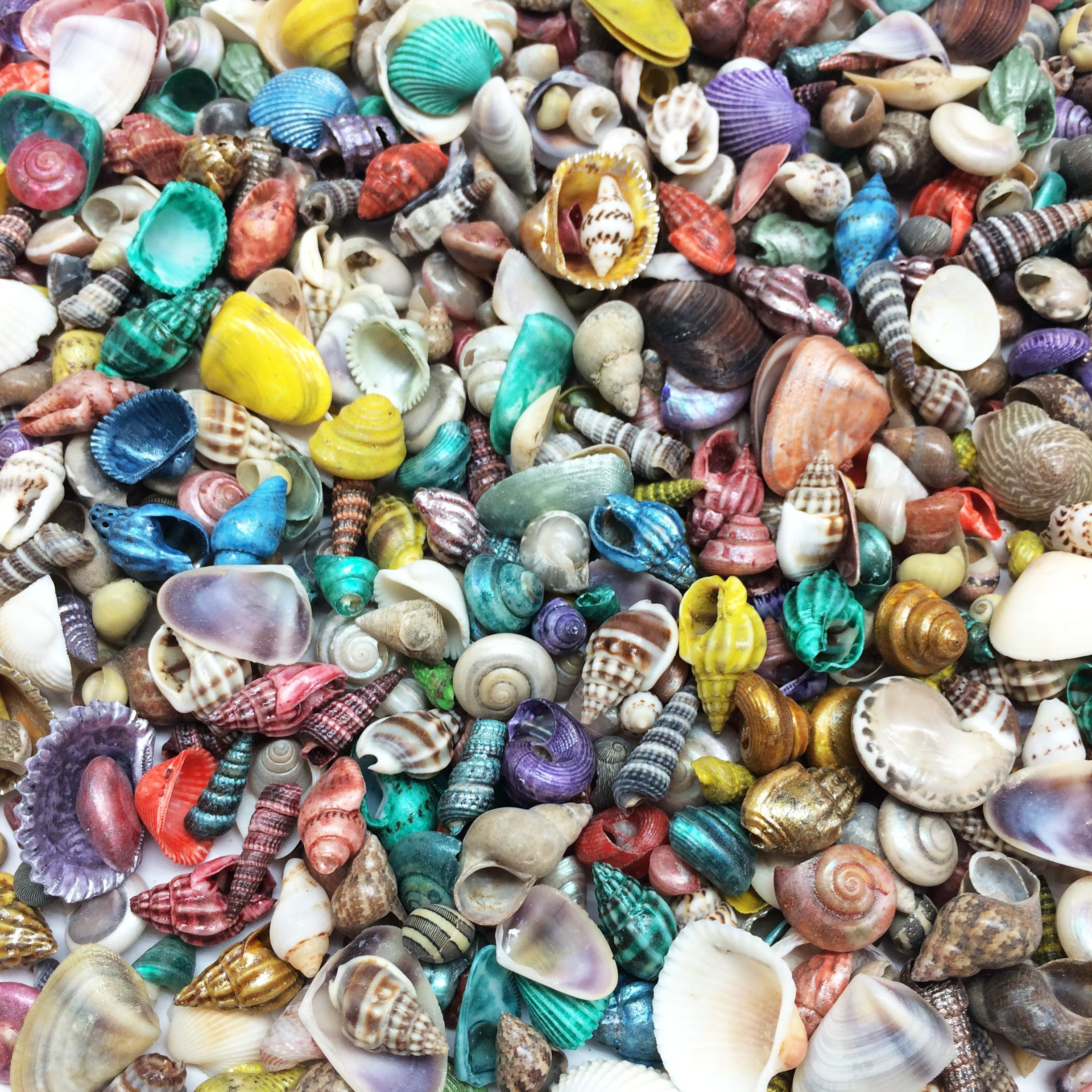 PEPPERLONELY Extra Small Dyed/Natural Mix Seashells, Very Small & Clean, 8 OZ Apprx.1600+ PC Shells, 1/4 Inch ~ 1/2 Inch