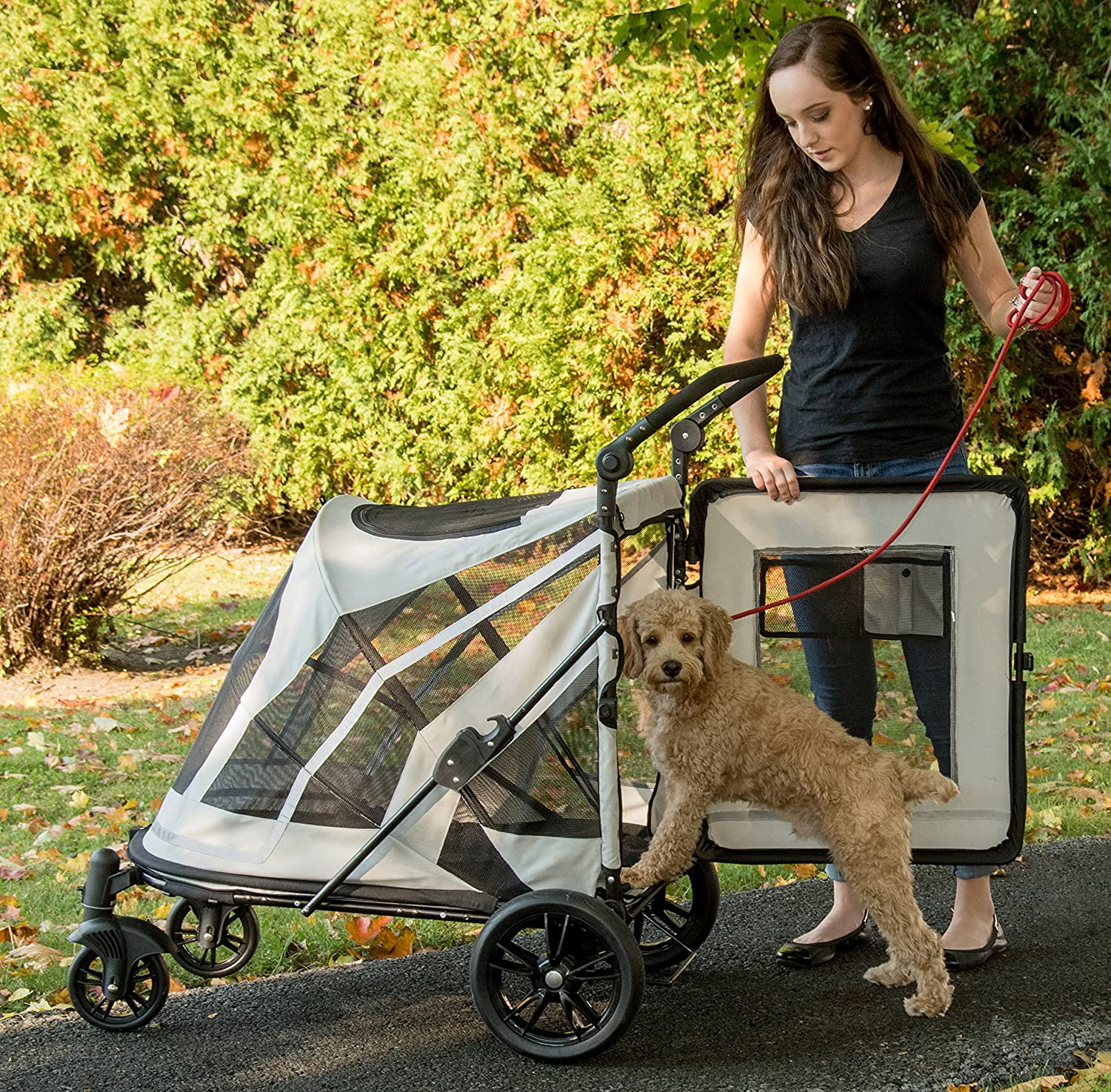 mobility aids for senior dogs - dog strollers