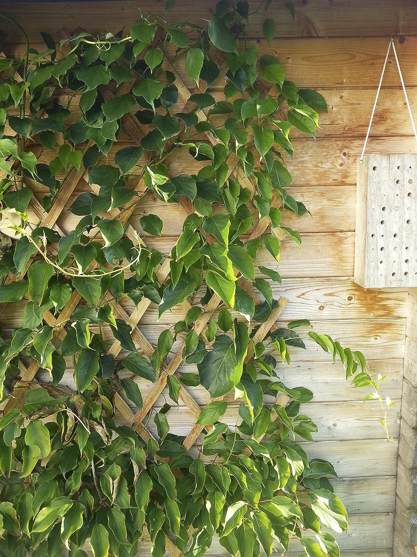 Windhager Hartholz-Spalier Rankhilfe Rankgitter Holzzaun Pflanzengitter zusammenfaltbar variabel verstellbar 90 x 180 cm beige 05673