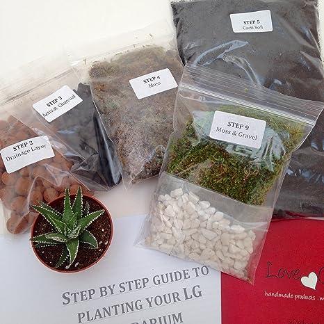 Diy Succulent Cacti Terrarium Kit 1250 Cm3 Step By Step Guide