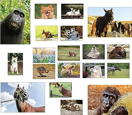 /200/Ensemble de cartes postales Animal Id/éal pour collectionneurs et post Crossing Cartes postales animaux/