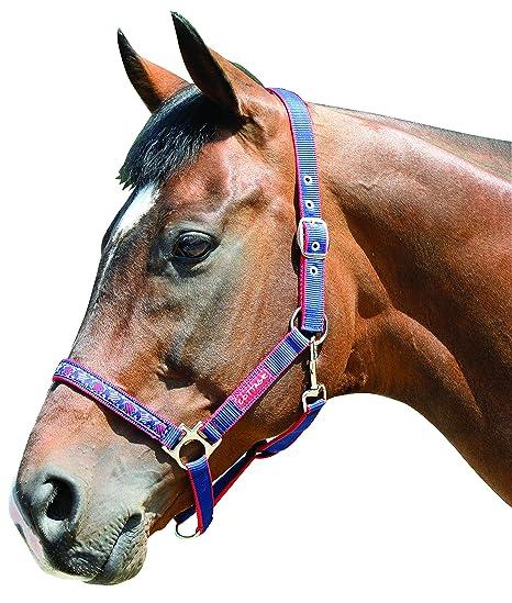 Amazon Com Harry Hall Galaxy Horse Head Collar Navy Blue Cob