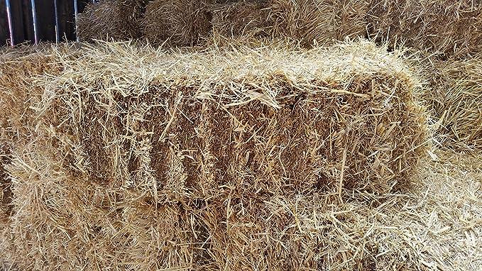 Bala de paja - Cebada de calidad alimentaria, aprox. 18 kg: Amazon ...
