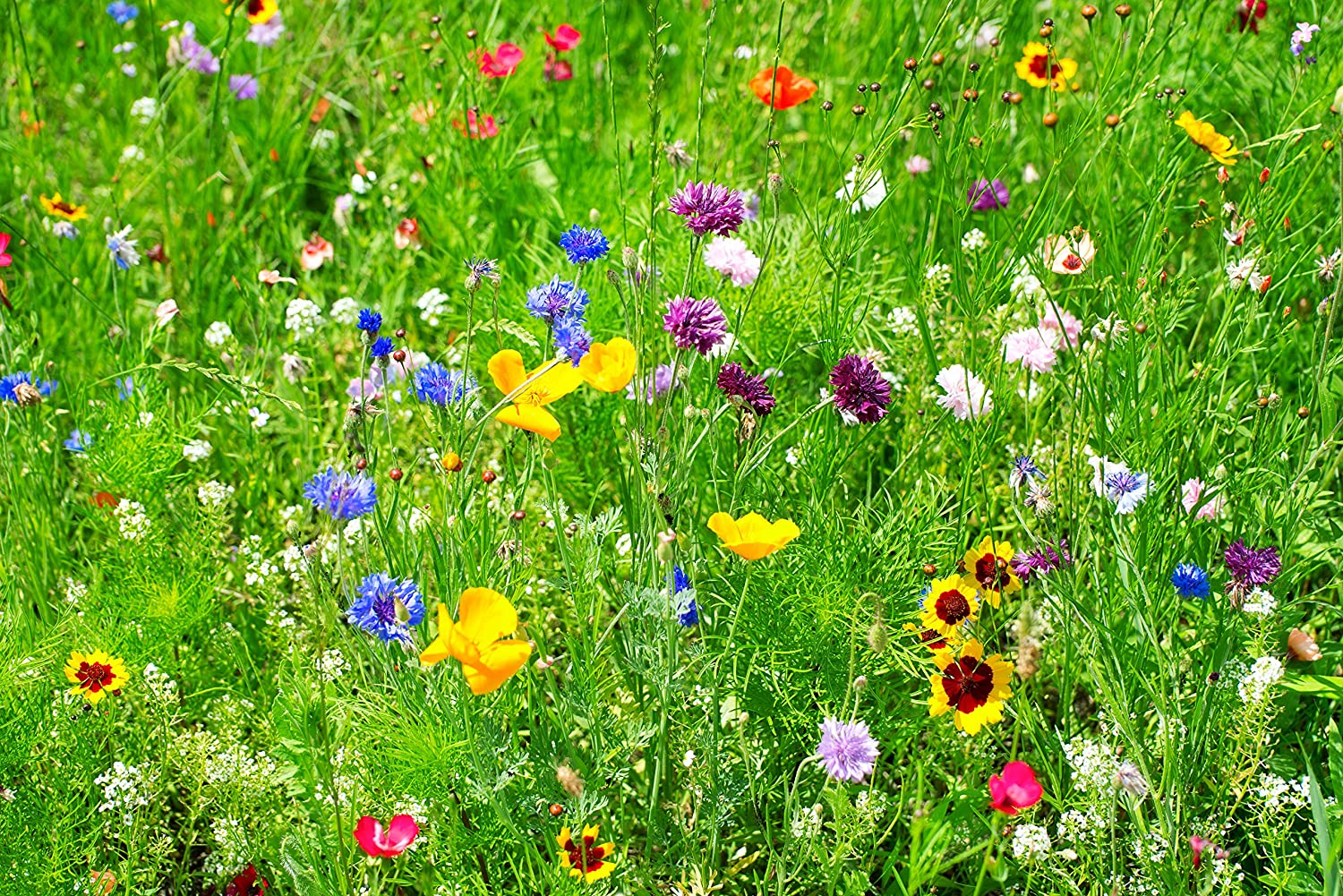 Bulk Wildflower Seeds Partial Shade Mix 14 Pound Bag Over 14000
