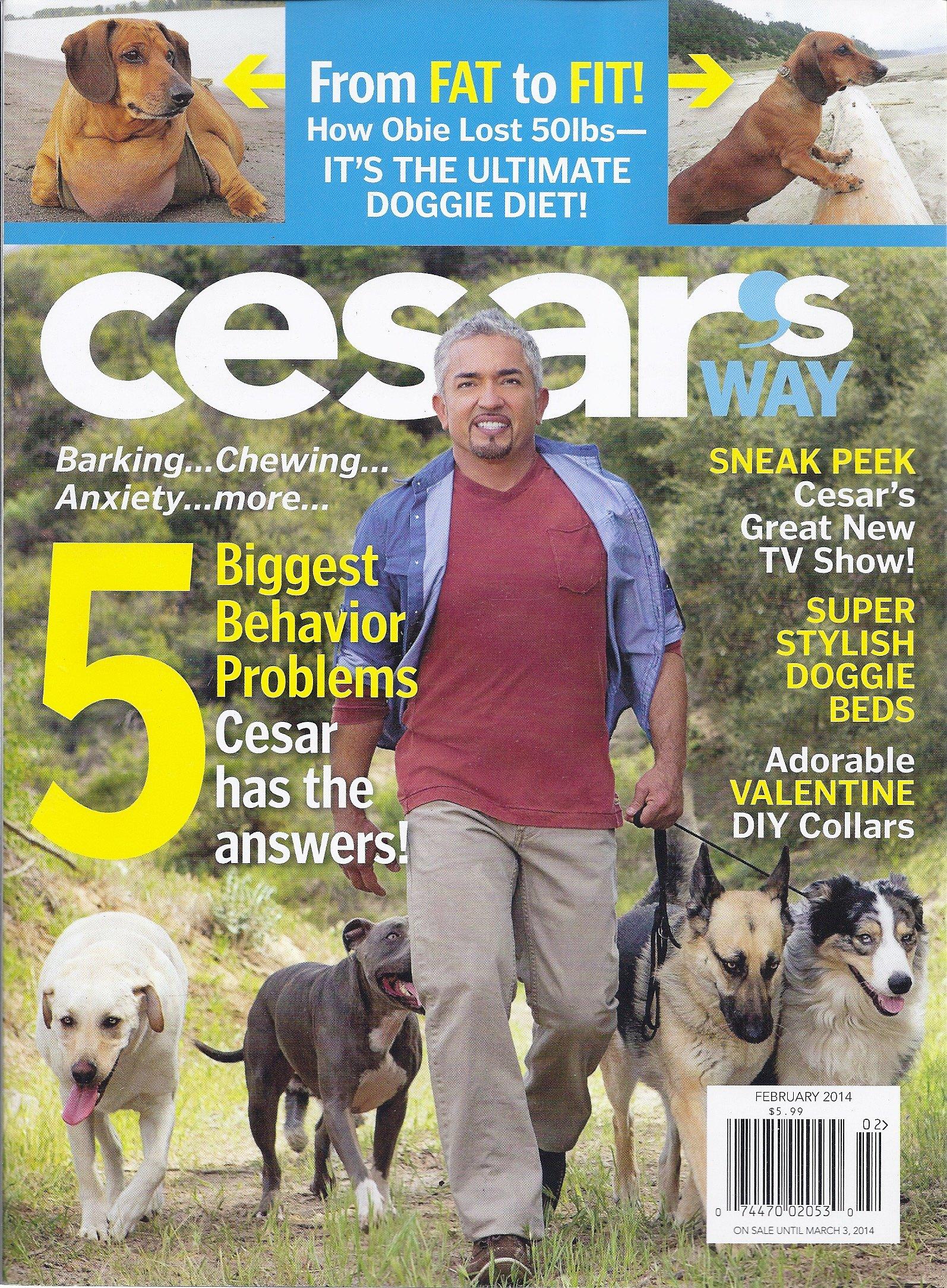 Cesars Way Everyday Understanding Correcting product image