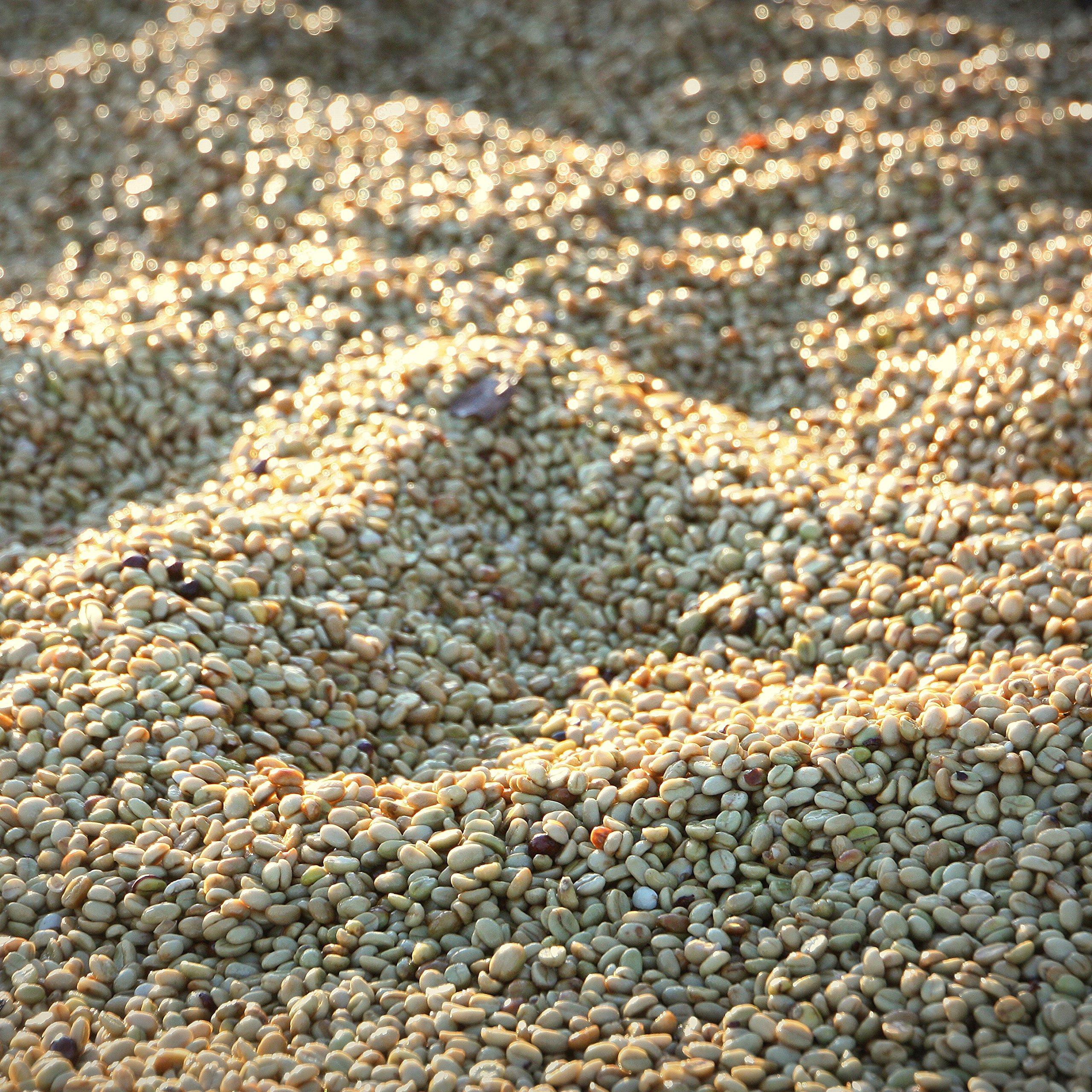 Rwanda Coko Honey (5 lb) Unroasted Green Coffee Beans 100% Specialty Arabica Caffeinated Beans