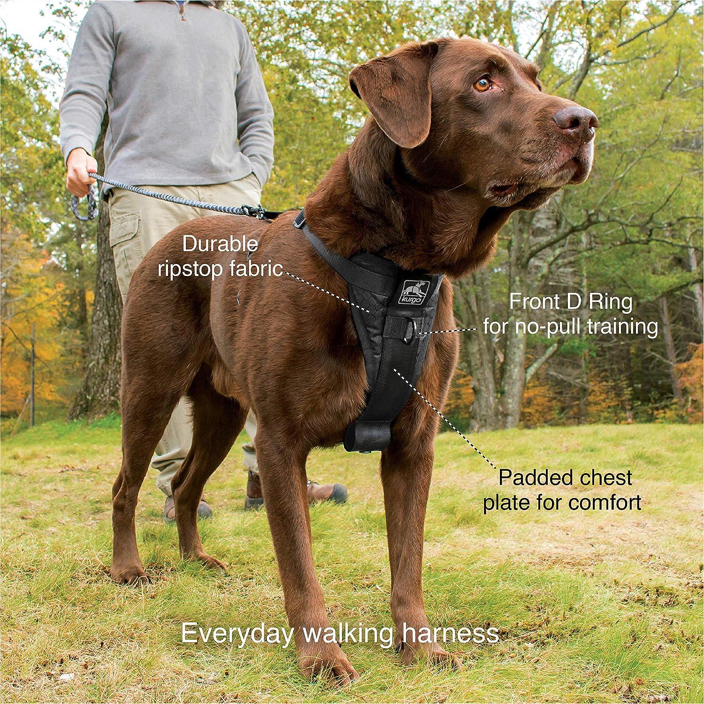 Amazon.com : Kurgo Dog Harness | Pet