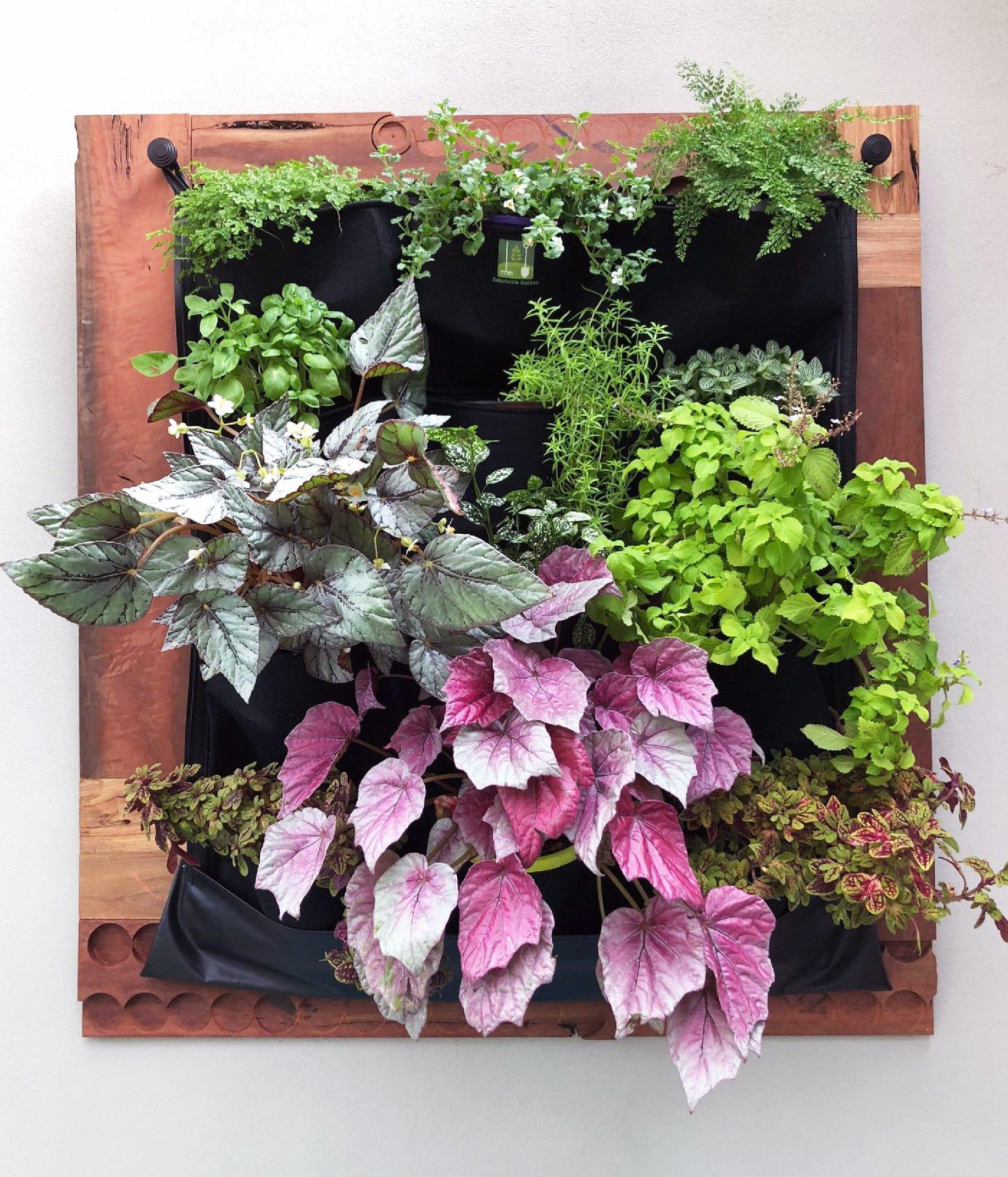 INDOOR Waterproof 12 Pocket Vertical Living Green Wall Planter by Delectable Garden