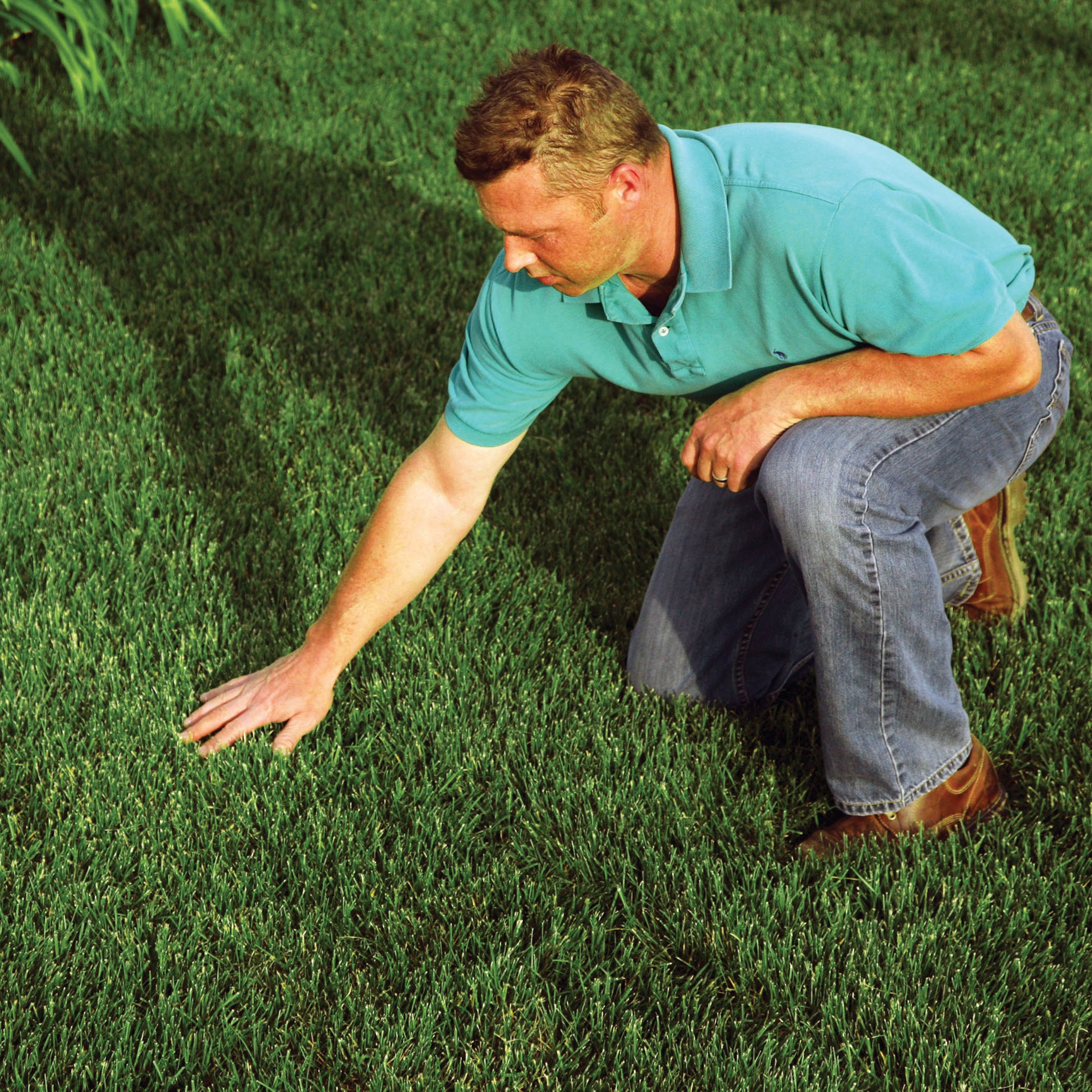 EZ-Straw Grass Seed Germination and Erosion Control Blanket - 4ft. x 50ft. (200 sq. ft.) by EZ Straw
