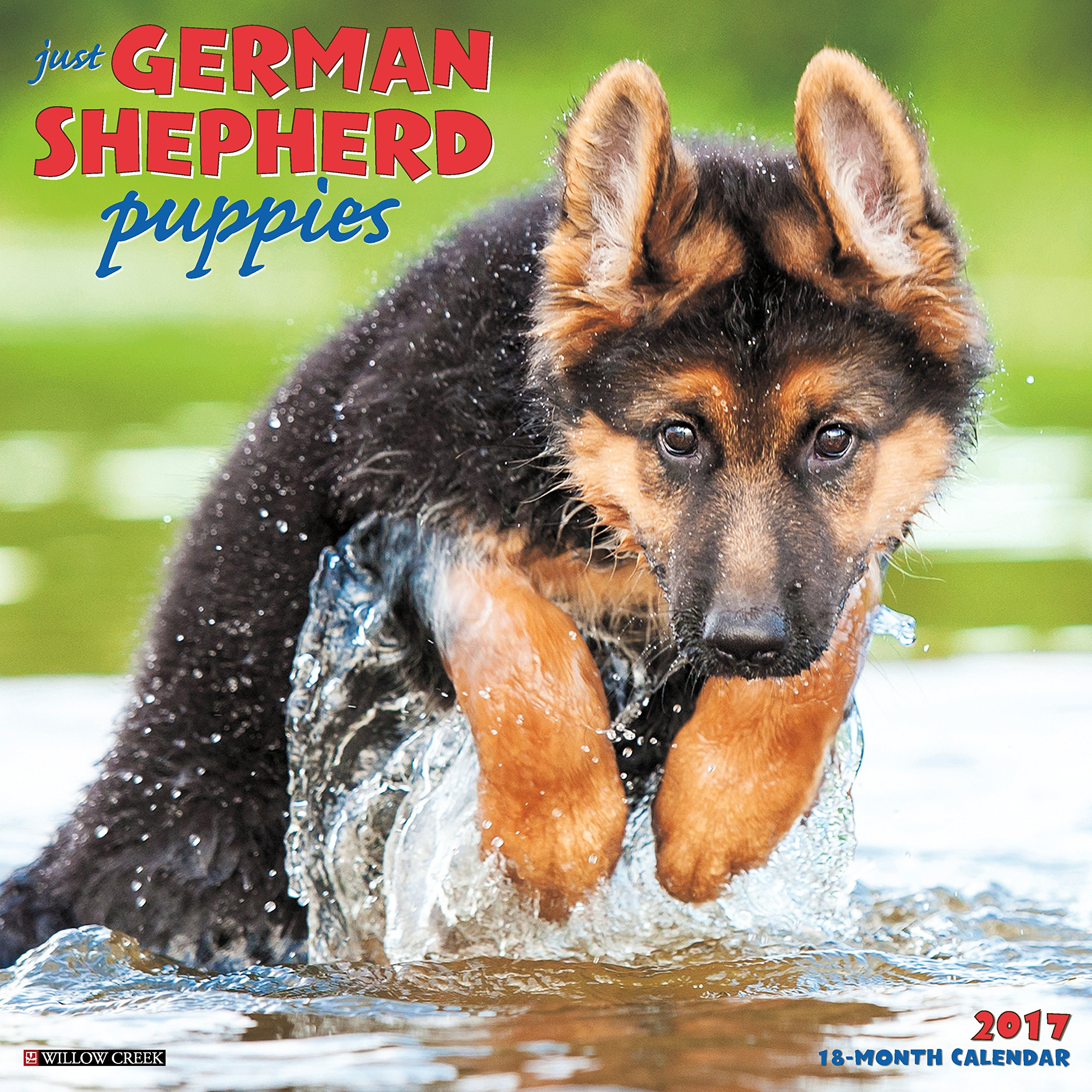 german sheperd puppies