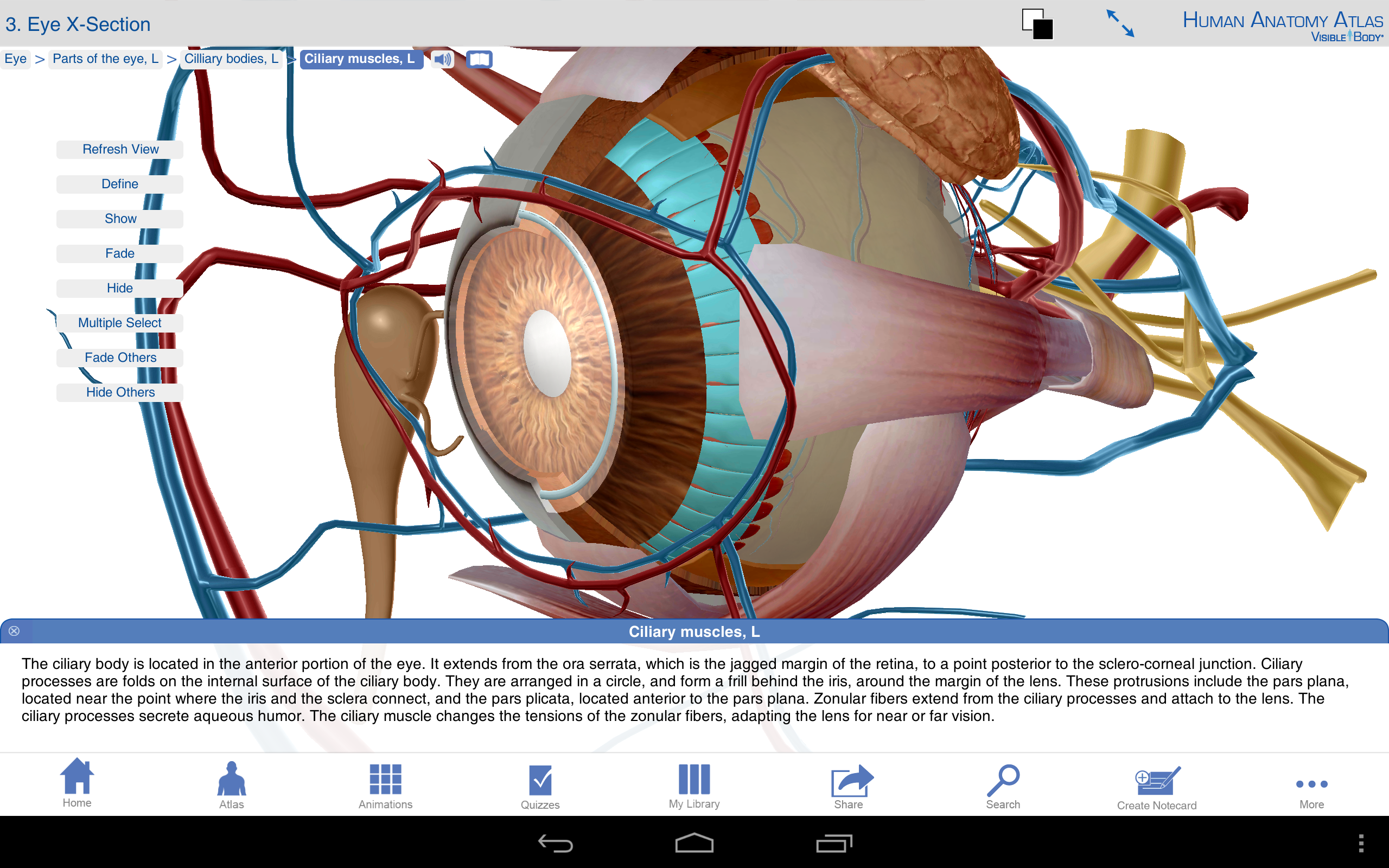 Amazon com: Human Anatomy Atlas: Appstore for Android