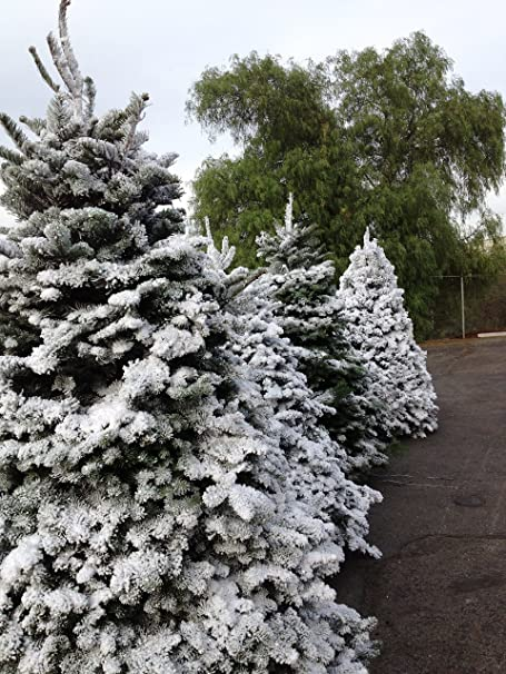 Sno-bond Christmas Tree Snow Flock Peak Seasons 11101