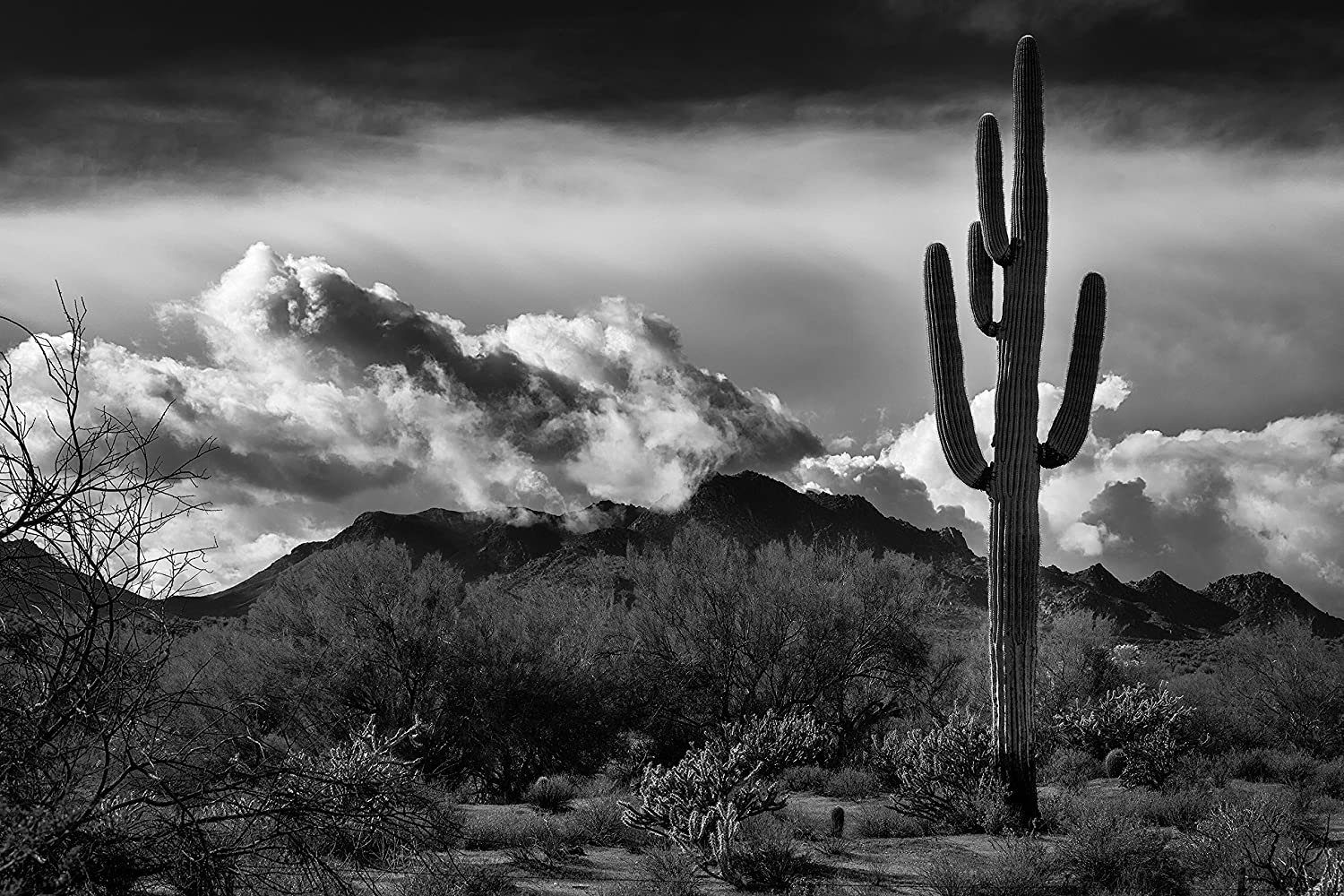 Amazon com landscape photography arizona desert cactus saguaro