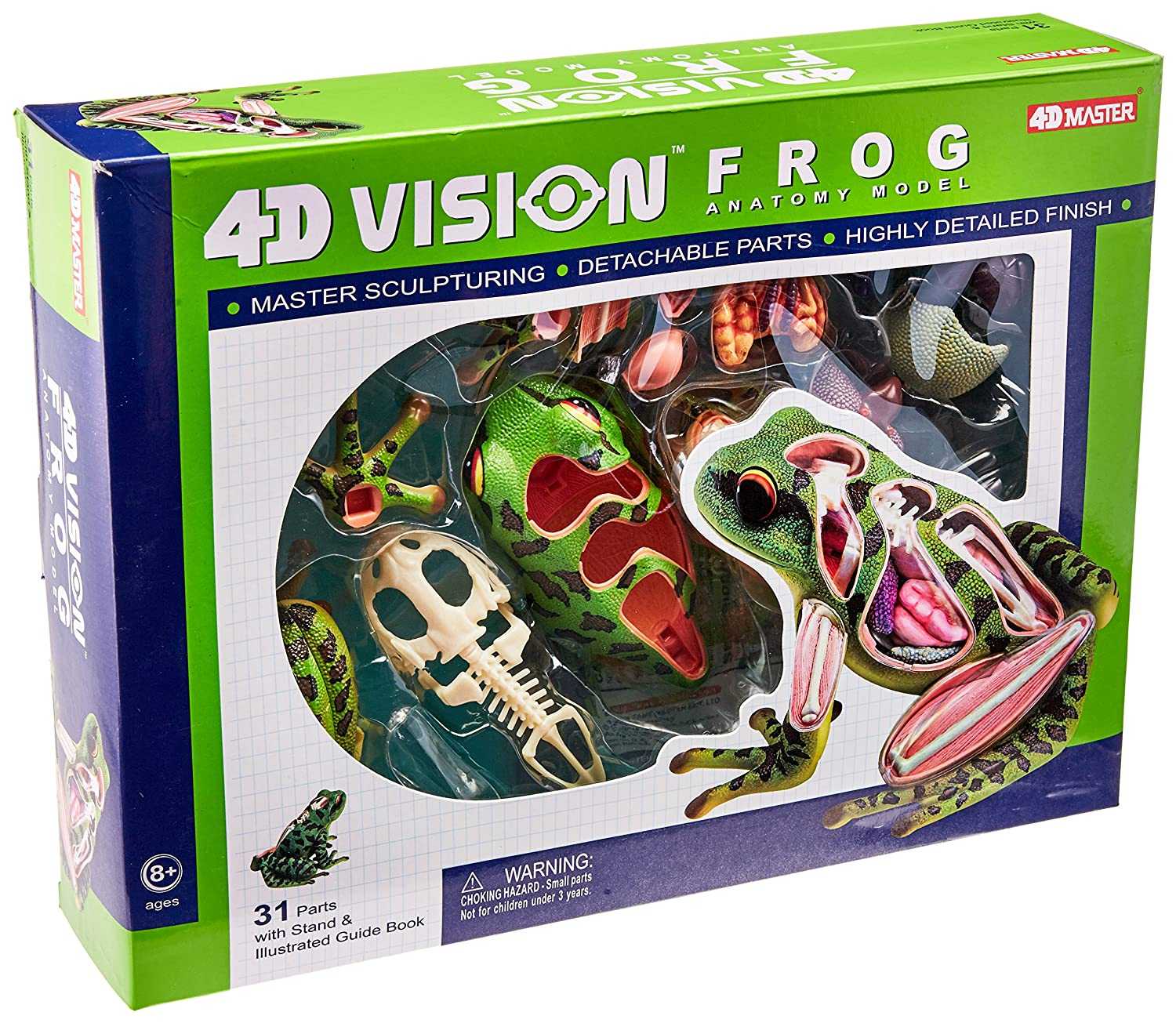 Amazon.com: 4D Vision Frog Anatomy Model: Toys & Games