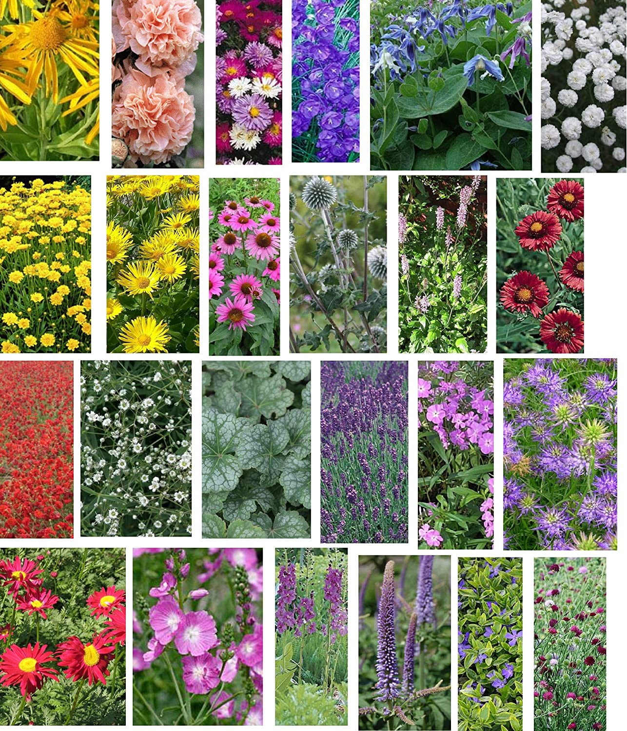 24 Cottage Garden Flower Plug Plants Collection