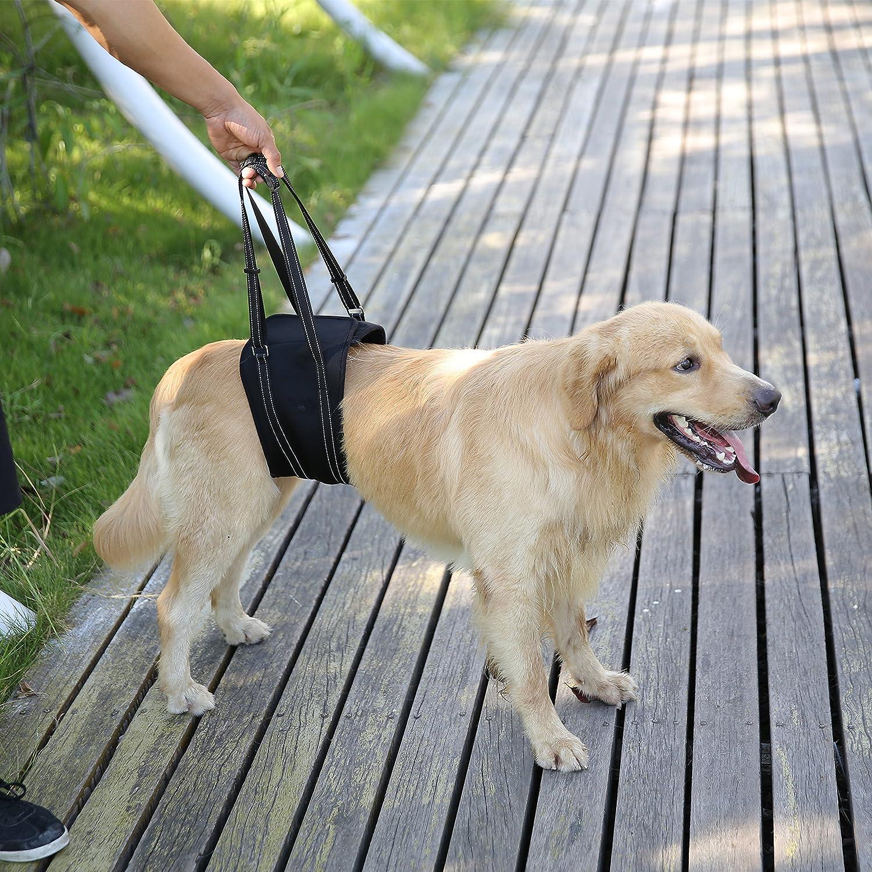 Rainbowsun Perros portabebés arnés del perro para problemas en la ...
