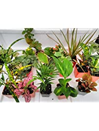 live indoor plants grocery gourmet food bonsai house plants orchids bamboo more. Black Bedroom Furniture Sets. Home Design Ideas