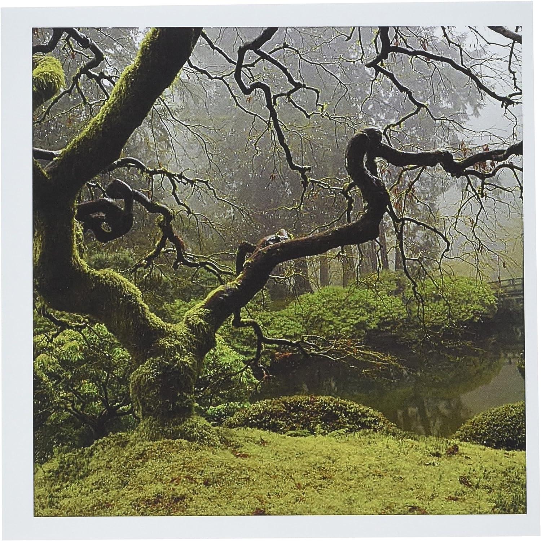 "3dRose Japanese Maple Portland Japanese Garden Oregon Us Greeting Cards, 6"" x 6"", Set of 6 (gc_191632_1)"