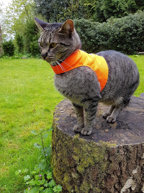 Chaqueta para gato Mynwood Cat Jacket para gato adulto tipo arn/és color naranja a prueba de escape de alta visibilidad