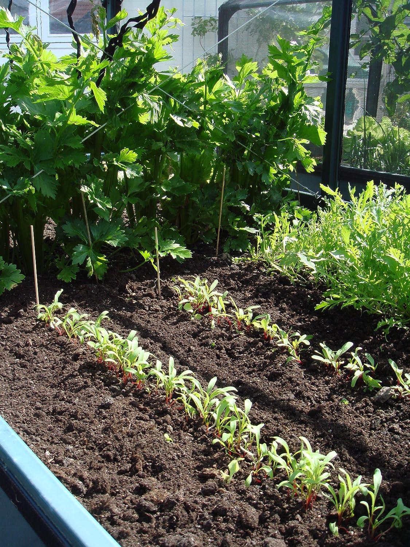 Growcamp Lean To Balkon Hochbeet Tomatenhaus Amazon De Garten