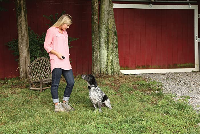 Tips-to-Use-Citronella-Bark-Collar-Effectively