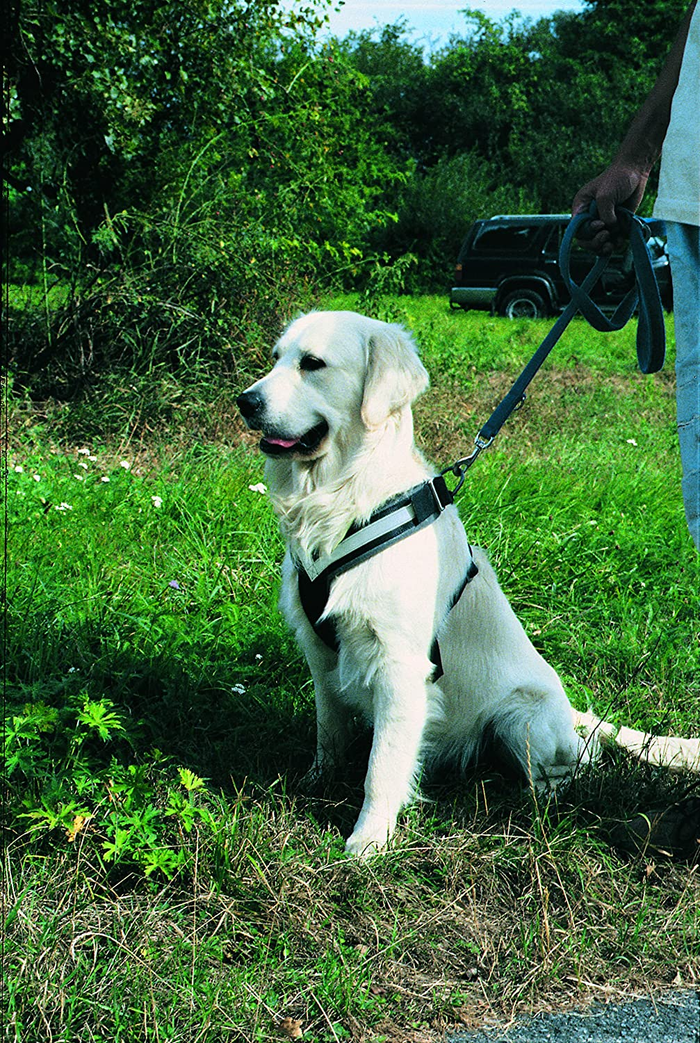 Amazon.com : The Original AllSafe Harness, Large : Pet Supplies