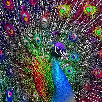 77e8d1569f Diamond Painting Kits for Adults by Paint With Diamonds XL 50x50cm 'Peacock  Showcase' Full