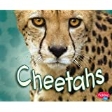 Cheetahs [Scholastic] (African Animals)