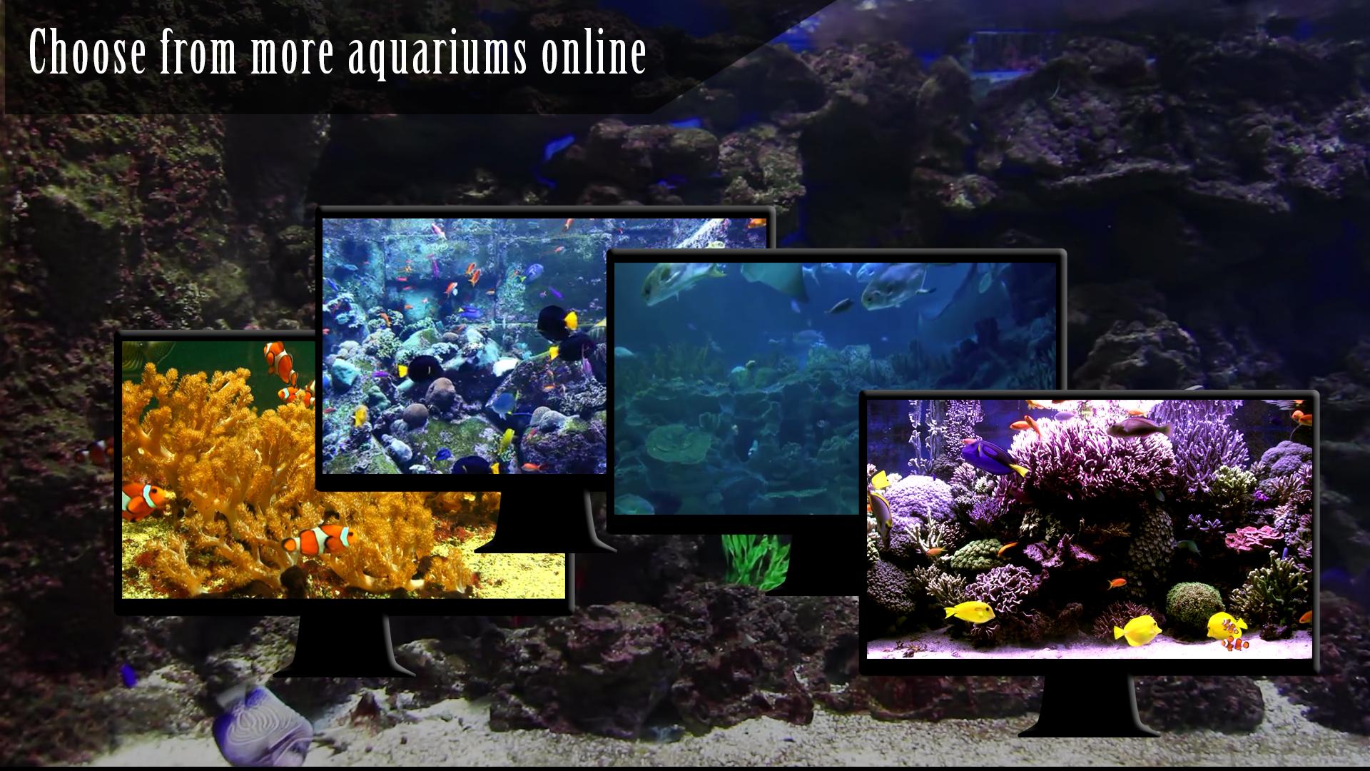 B1BA8r4fQqS Luxe De Gravier Aquarium Des Idées