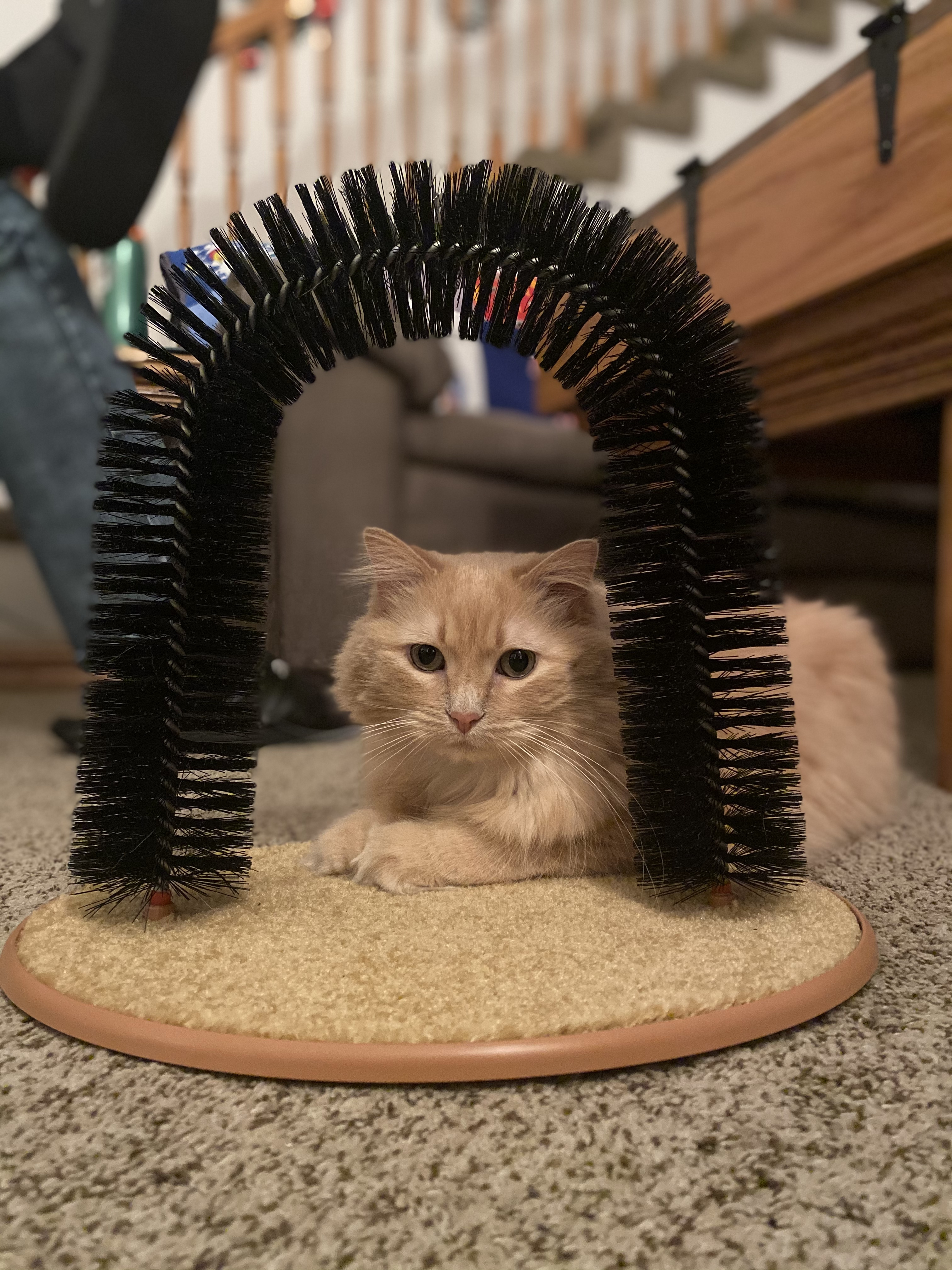 Cat Arch Self Groomer photo review