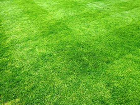 948d8ea2b54c 1 kg Grass Seed Covers 35 sqm (380 sq ft) - Premium Quality Seed - Fast  Growing - Hard Wearing Lawn Seed - Tailored to UK Climate - Trademark  Registered ...
