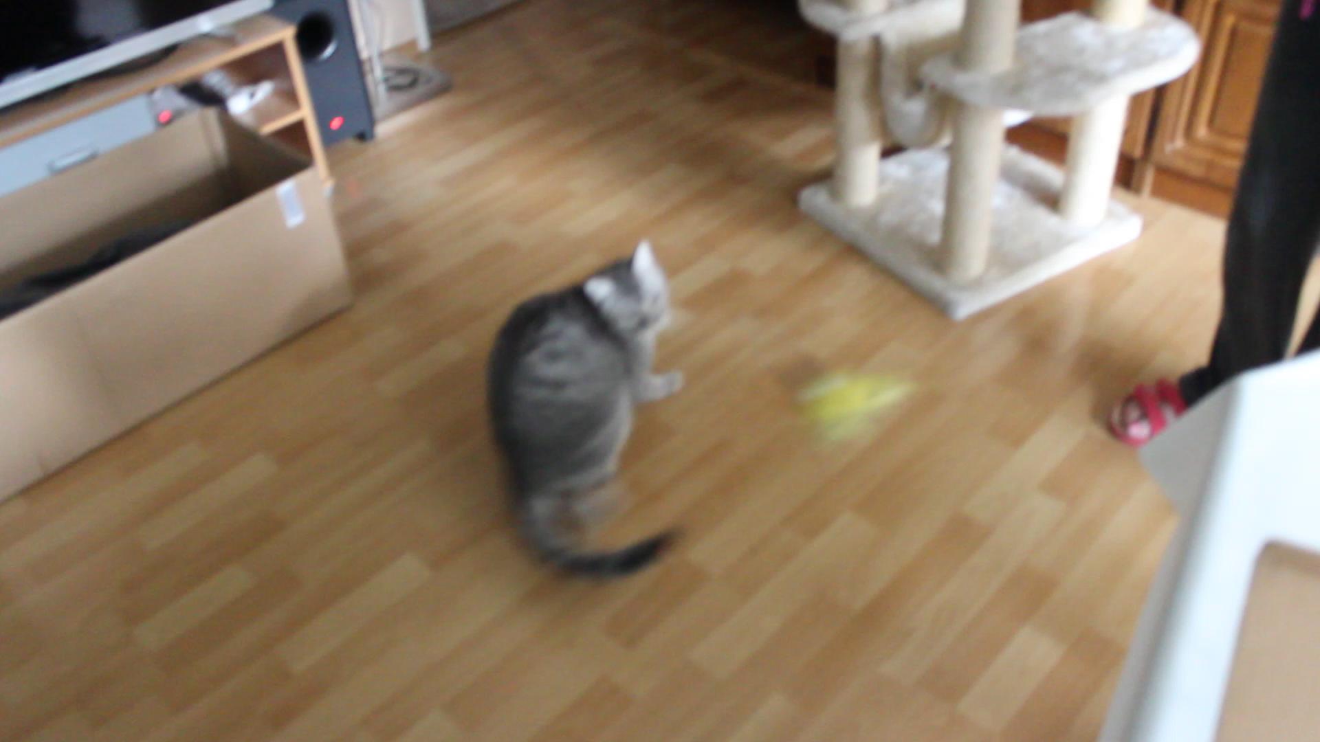 Beste Katze 5 Drahtstärke Bilder - Die Besten Elektrischen ...