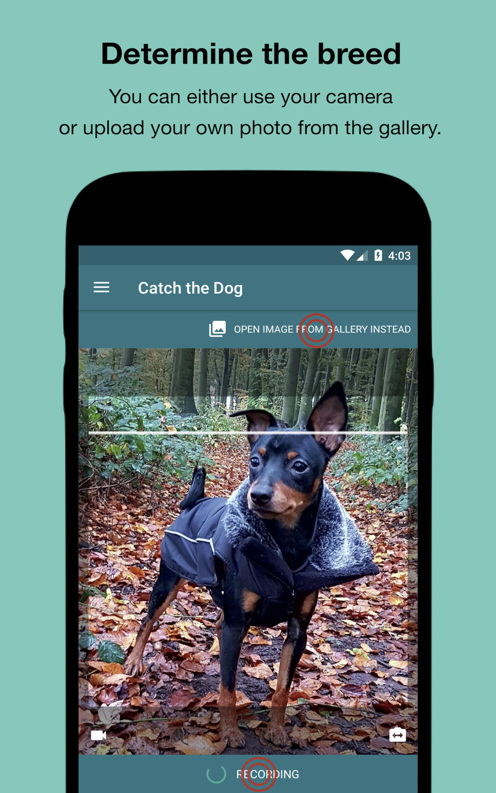 Dog Scanner - Identificación de la raza del perro: Amazon.es ...