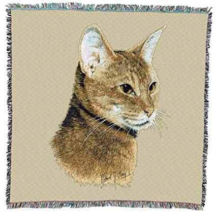 Abyssinian Cat Price Usa