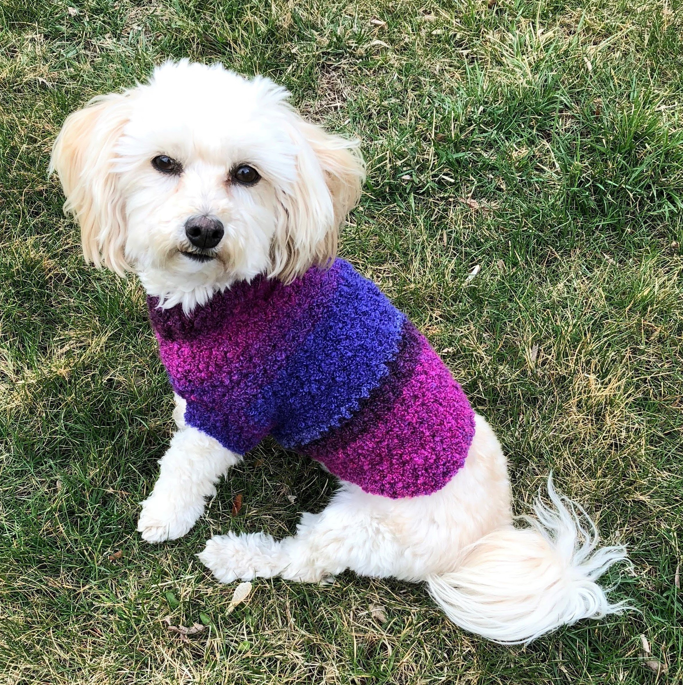 purple dog sweater, available in sizes XXS to L