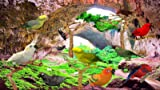 Birds Cave [Download]