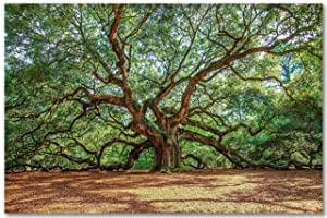 SouthernPlainsPhoto Angel Oak Tree Print, Nature Wall Art, Southern Home Decor, Charleston South Carolina Pictures, Gifts Under $20, Multiple Sizes Available, Not Framed
