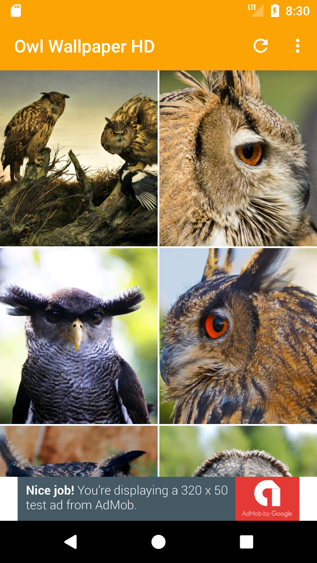 Amazon Com Owl Wallpaper Hd Appstore For Android