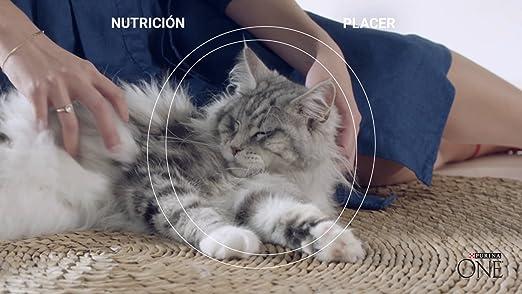 Purina ONE Bifensis Pienso para Gatos Esterilizados Buey y Trigo 6 x 1,5 Kg: Amazon.es: Productos para mascotas