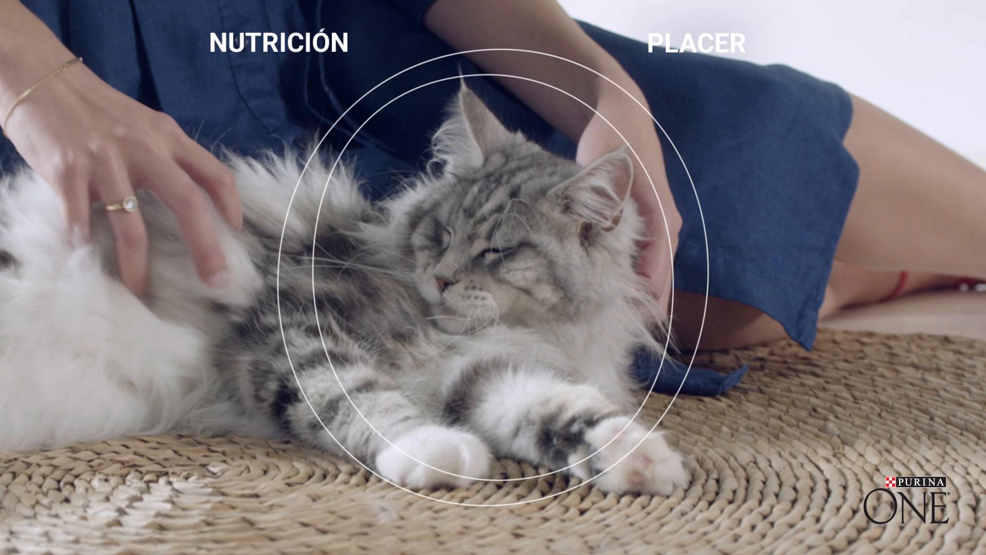 PURINA ONE Bifensis Pienso para Gatos Esterilizados Buey y Trigo 4 ...